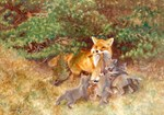 Painting of Momma Fox and Kits