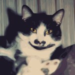 Beloved Cat With Mustache