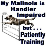 Malinois Agility