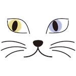 Charming Odd-eyed Cat
