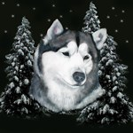 Alaskan Malamute with Snow