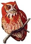 Screech Owl T-Shirts