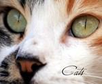 Cat Animal Calendars