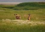 Spring Bucks