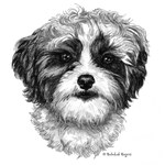 Shih-Poo