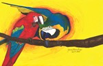 Colorful Macaws!
