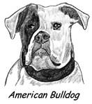 American Bulldog - 5 images
