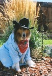 Cowboy Collie
