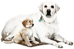 Domestic animals,Pets
