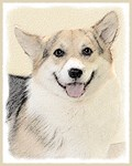 Corgi - Multiple Illustrations