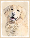 Golden Retriever Multiple Illusrtations