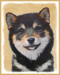 Shiba Inu-Multiple Illustrations