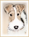Wire Fox Terrier-Multiple Illustrations