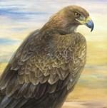 Desert Golden Eagle