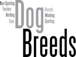 Dog Breeds in Words