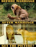 Marriage Lions