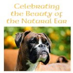 Celebrating the Beauty of the Natural Ear design