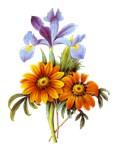 Redoute Bouquet