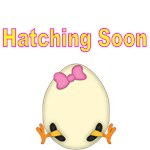 HATCHING SOON