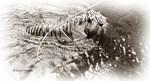 Sepia Tiger