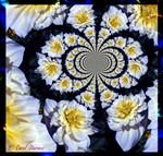 White & Yellow Floral Swirl