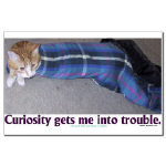 Curiosity Gets Me Into Trouble