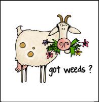Got weeds ?