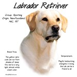 Labrador Retriever (yellow)