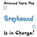 Greyhound Charge