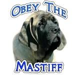 Mastiff Puppy Obey