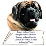 Mastiff Tribute