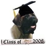 Mastiff Grad 08