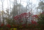 .foggy sumac. II