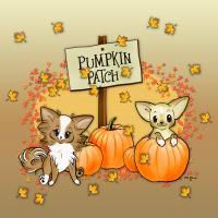 Punkin Patch Chihuahuas