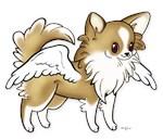 Flash Chihuahua Angel