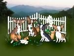 Mountain Garden Chihuahuas