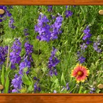 Wildflowers #1