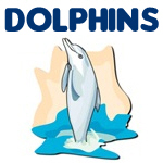 Cute & Cool Dolphin Designs