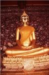 Golden Budha Meditating