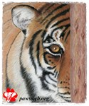 Pastel Drawing PAWS Tiger-Misc & More