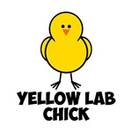 Yellow Lab Chick