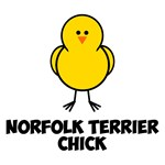 Norfolk Terrier Chick