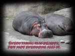 Hippos are beautiful!