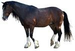 Mustang Cahlibur