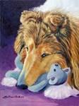 Shetland Sheepdog Dreamer