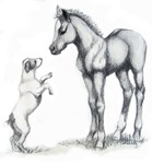 Jack russle terrier, and foal