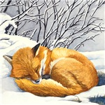 Sleepy Winter Fox