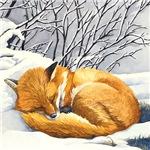 Sleepy Winter Fox