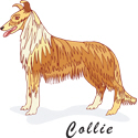 Collie T-shirt, Collie T-shirts