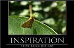 INSPIRATION29